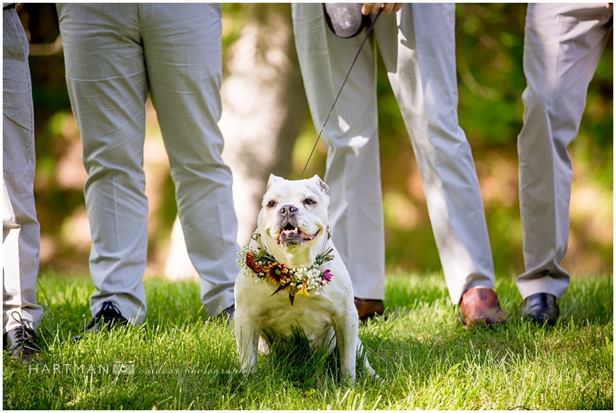 Dog Ring Bearer Photographer