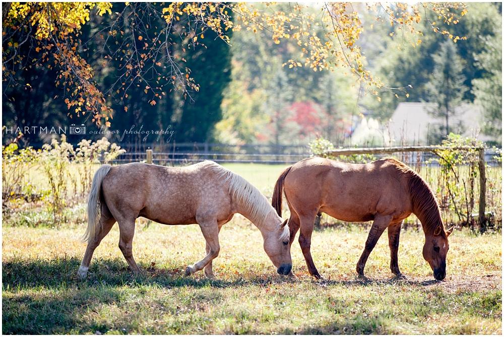 Dewberry Farm Kernersville NC 0001Wedding