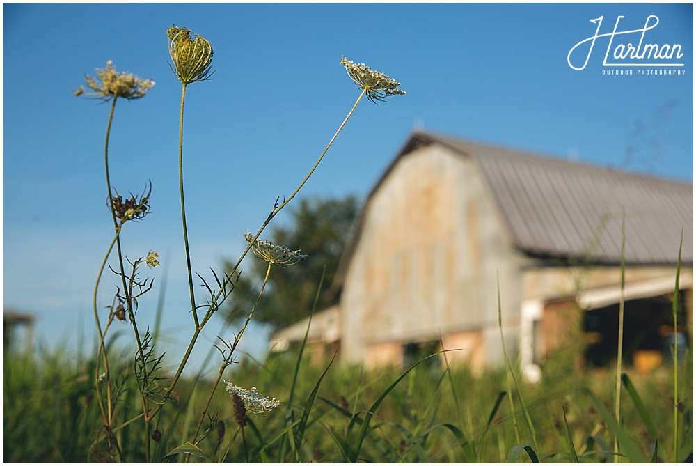 Starlight Meadow North Carolina Wedding Photographer