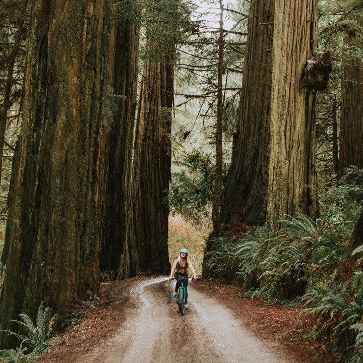 Biking Jedediah Smith Redwoods State Park | California