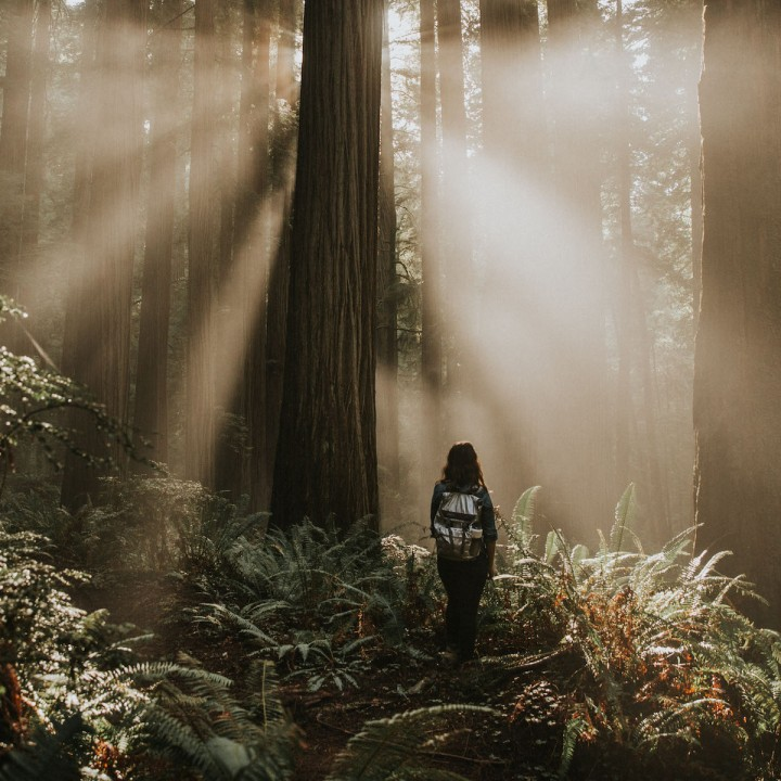 Hiking in Jedediah Smith Redwood Forest | California