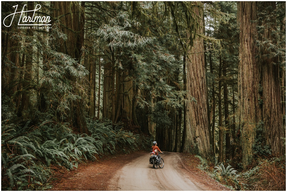 redwood forest wedding elopement photographer_0002