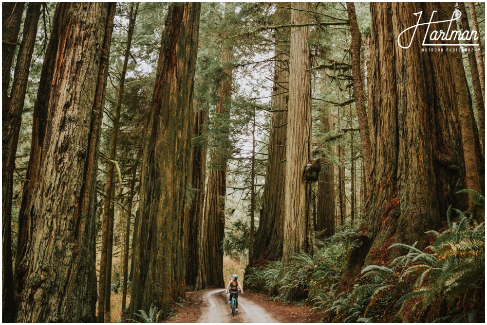 photographer_0004 redwood forest wedding elopement photographer_0005