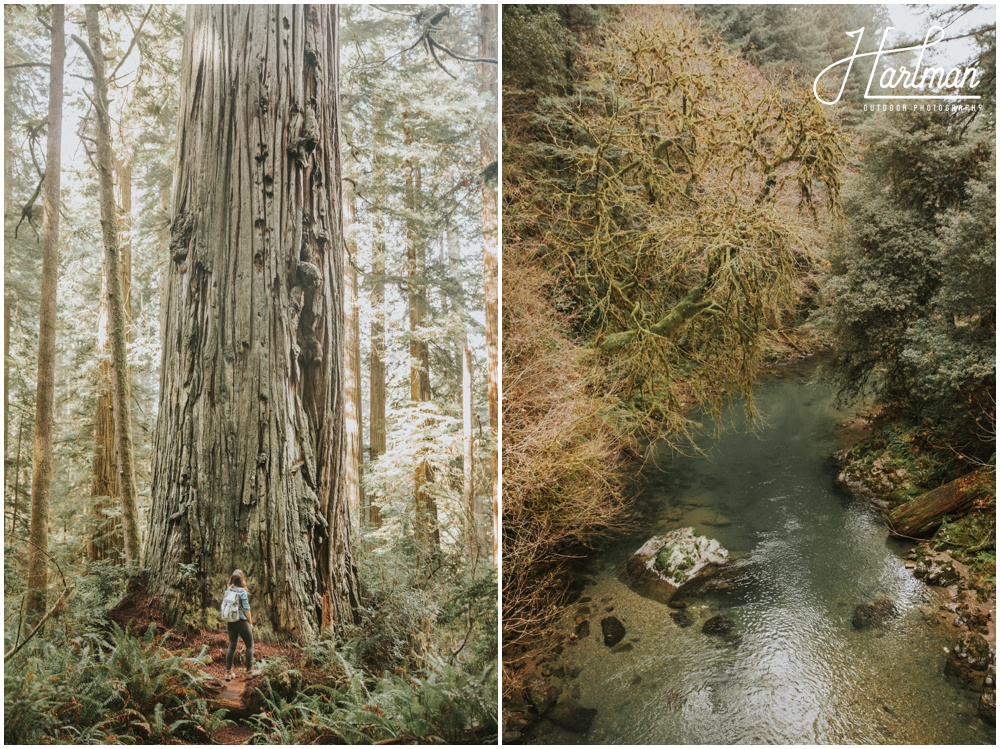 redwood forest wedding photographer_0031