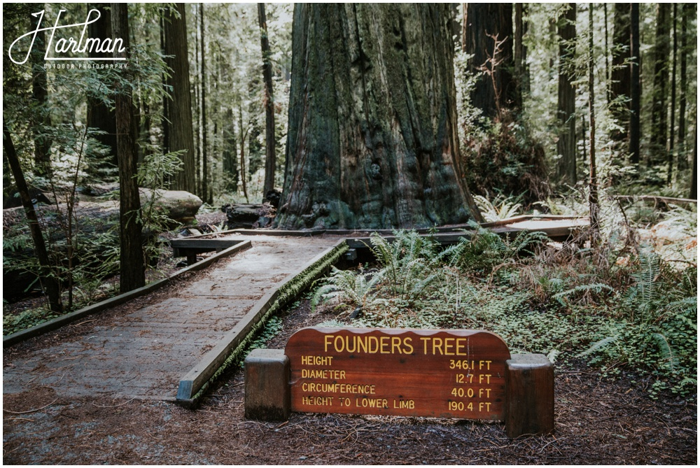 photographer_0067 redwood forest wedding elopement photographer_0068