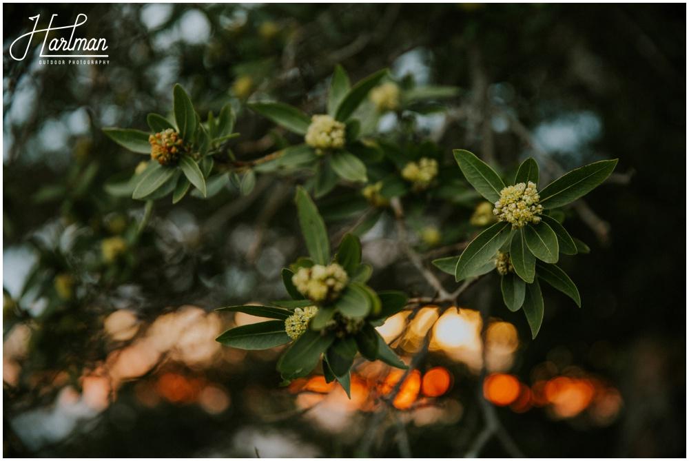 Mt Tamalpais Flowers _0012