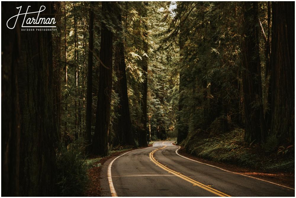 Redwood Forest Wedding Elopement Photographer_0009
