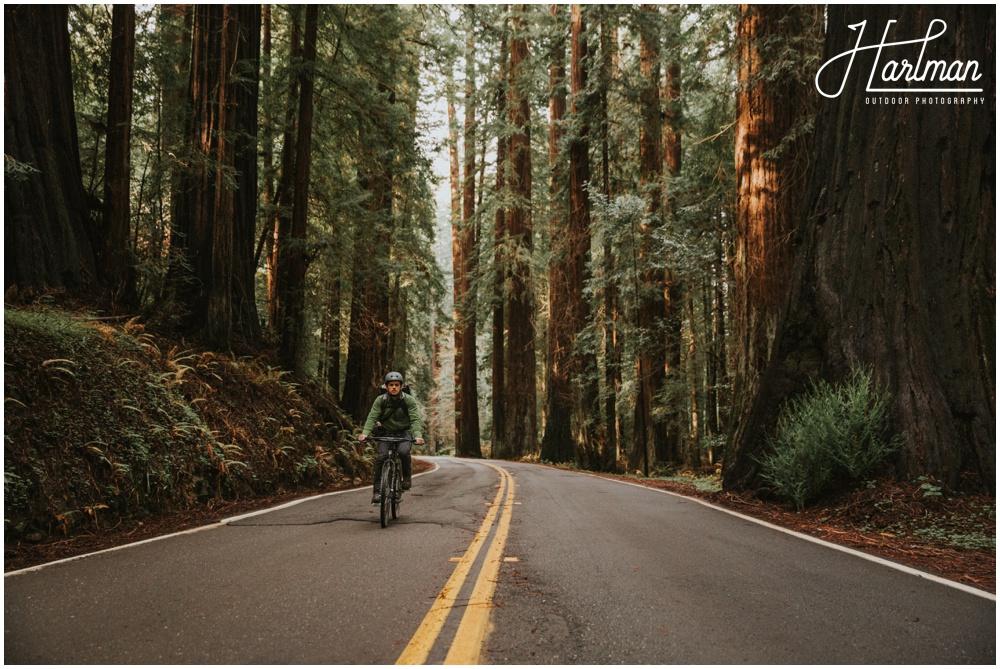 Redwood Forest Wedding Elopement Photographer_0010