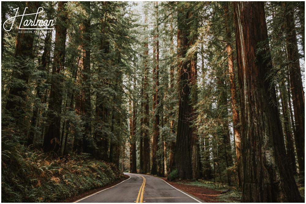 Redwood Forest Wedding Elopement Photographer_0027