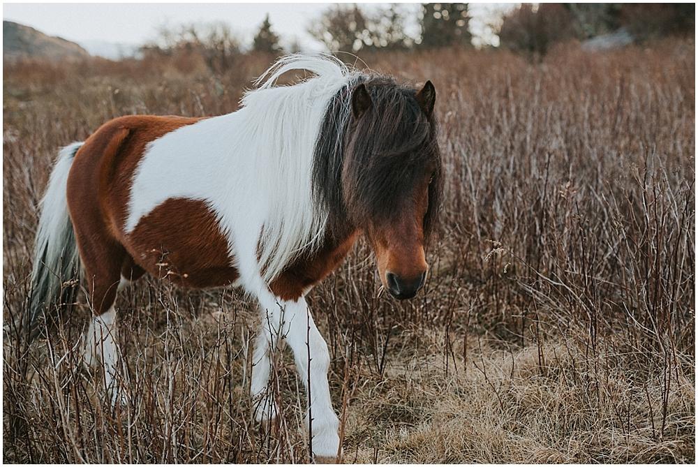 Grayson Highlands pony