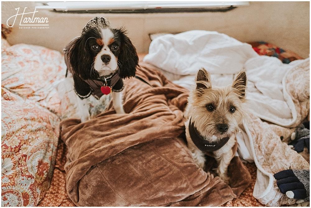 Dog engagement session