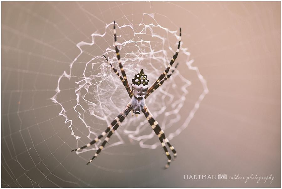 Puerto Rico Travel Photography Macro Spider