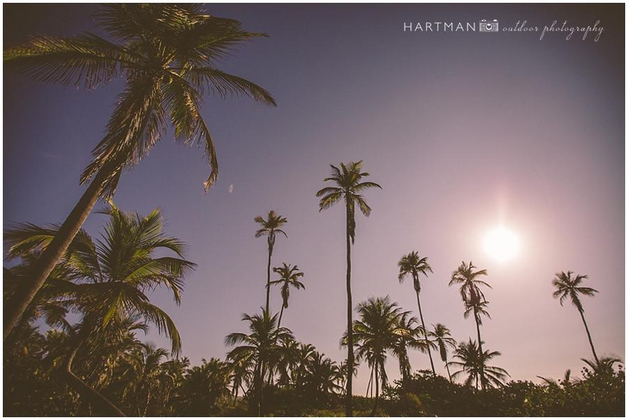Puerto Rico Travel Photography Palm Trees