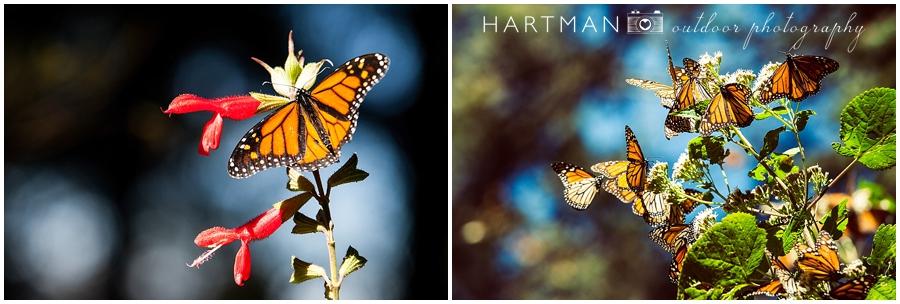 Butterflies Mexico Photos