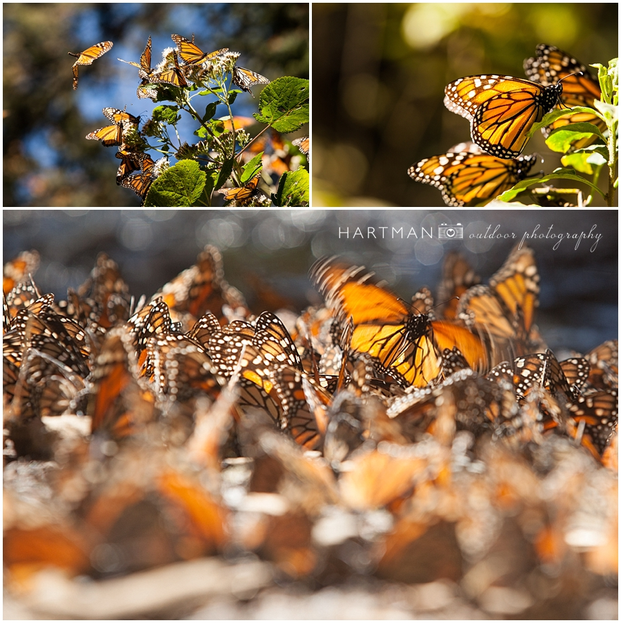 Butterflies Mexico Photography