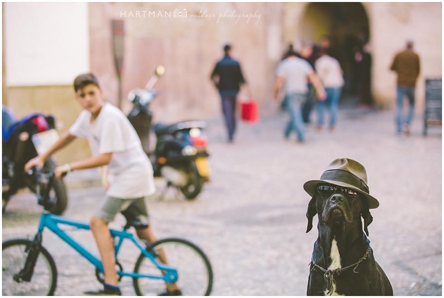 Dog Spain