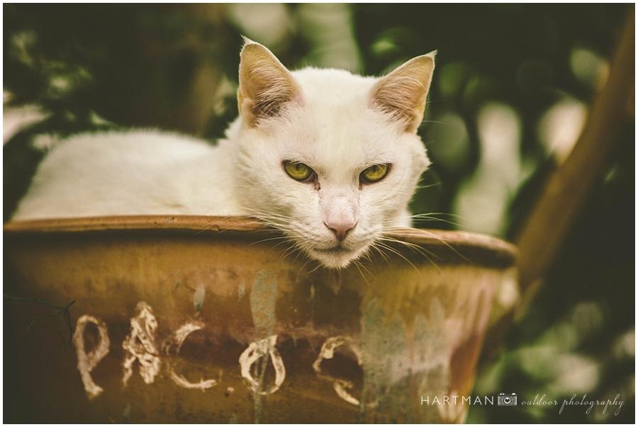 Spain Travel Photos Cat