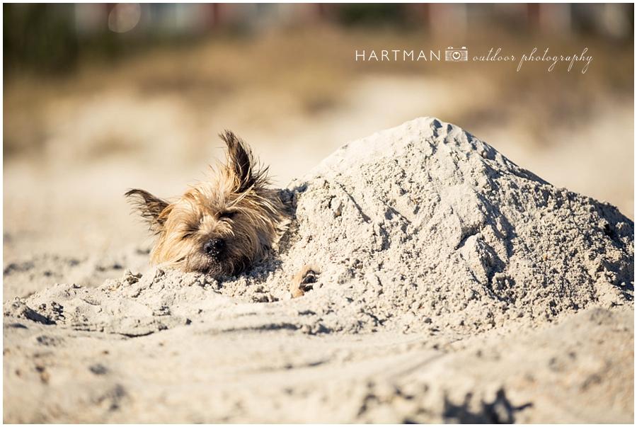 Wedding Photographer Raleigh Winter Dog Beach