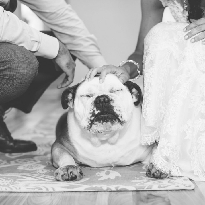 Including Your Pet on the Wedding Day