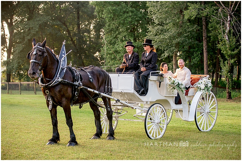 Bride and Groom on Horse Drawn Carriage