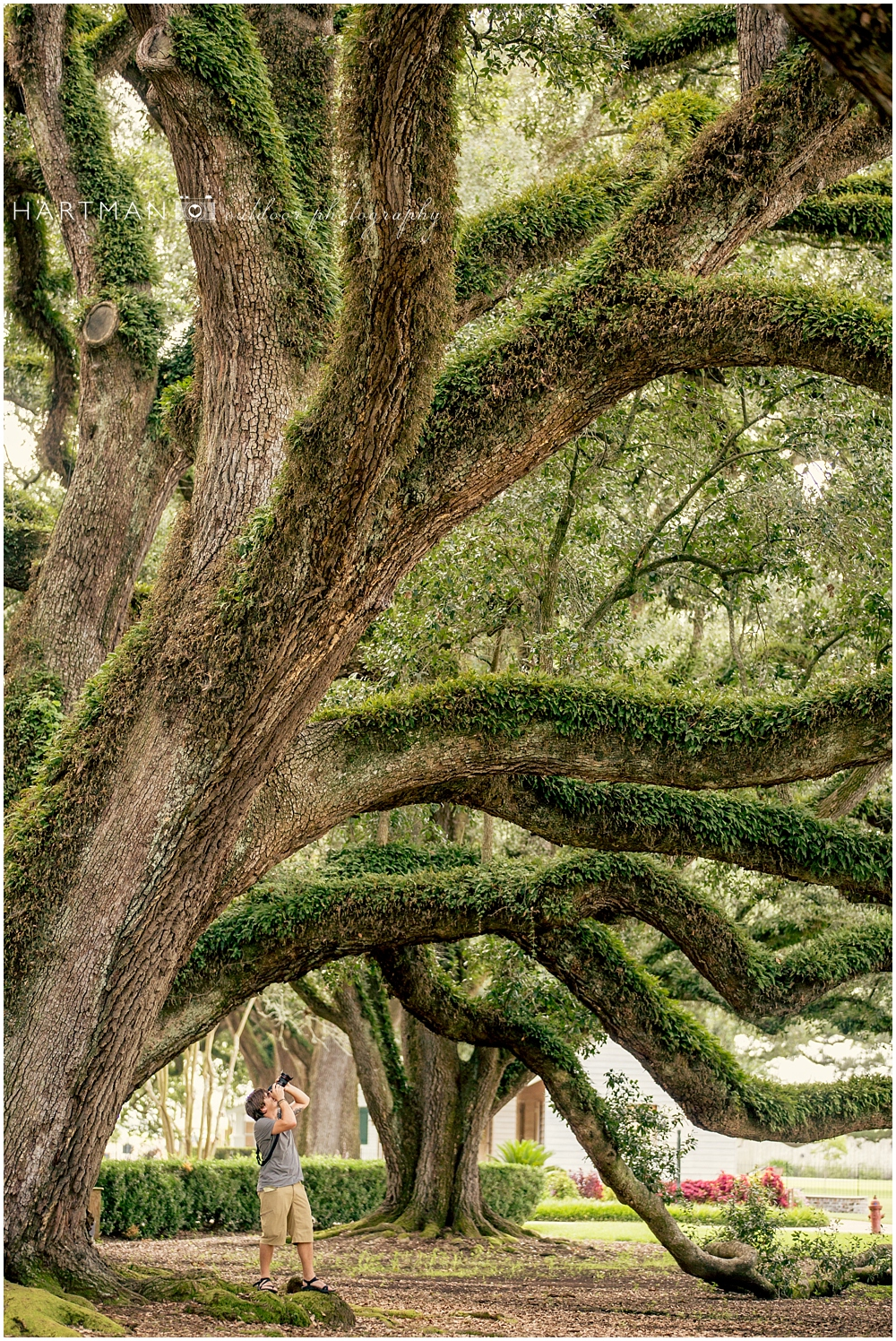 Oak Alley Plantation Trees