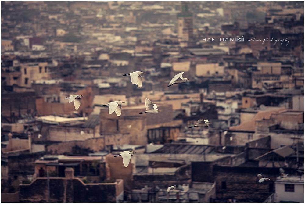 Fes Morocco Destination Wedding Photographer 00130