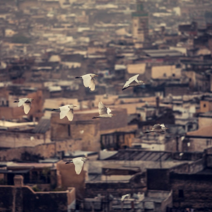 Hartmans Visit the City of Fes, Morocco
