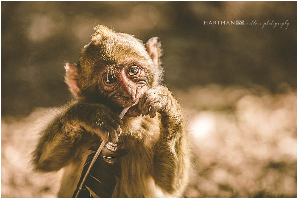 Baby Monkey Fes morocco Wedding Photographer