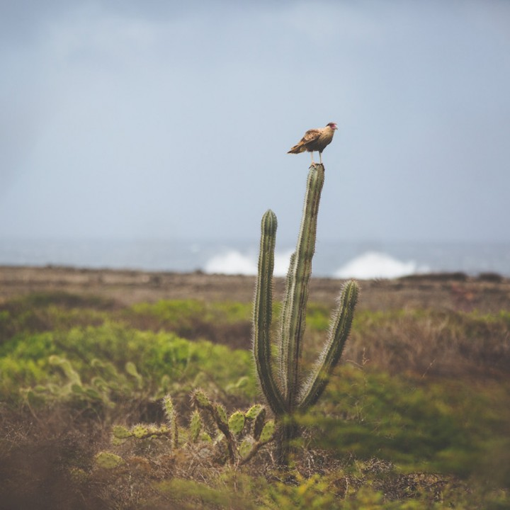 Exploring the Island of Curacao: In the Desert