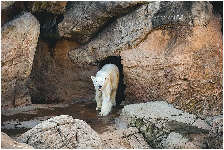 North Carolina Aquarium Zoo Wedding 00001