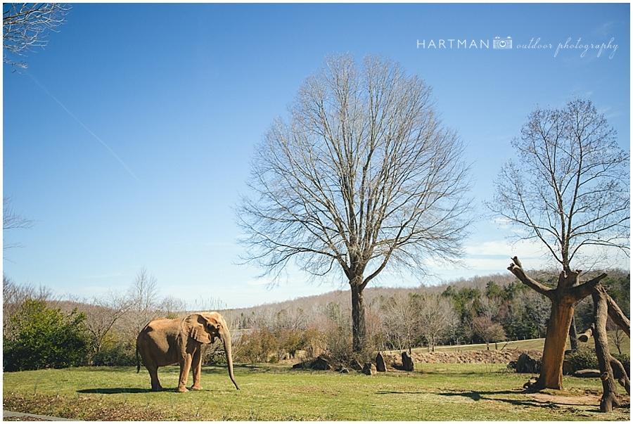 North Carolina Zoo Wedding 00022