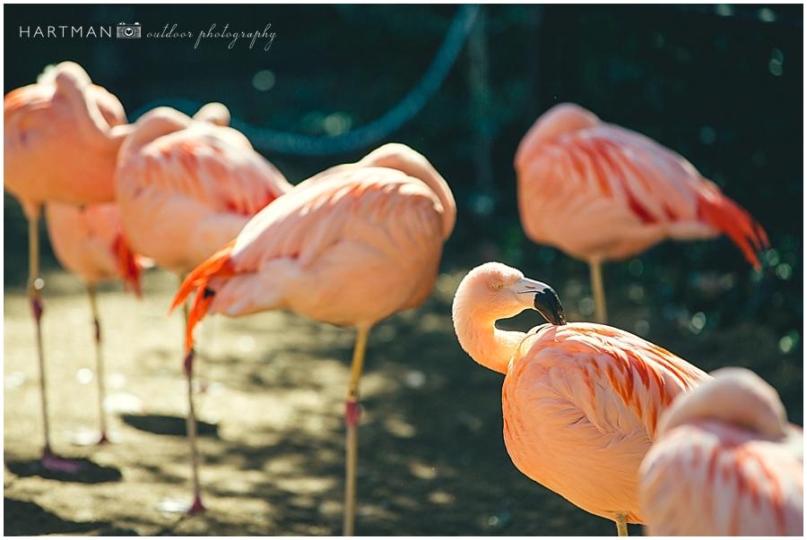 North Carolina  Zoo Wedding 00036