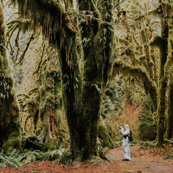 Hoh Rainforest - Hall of Mosses | Washington