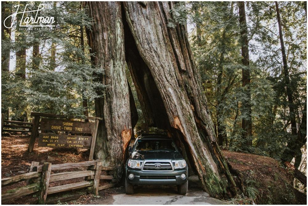 Photographer 0070 Redwood Forest Wedding Elopement 0072
