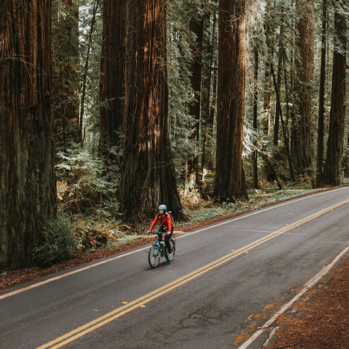 Bicycling the Avenue of Giants | California
