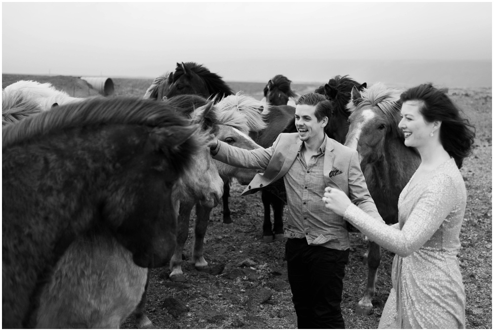 Icelandic Horses Wedding Pics