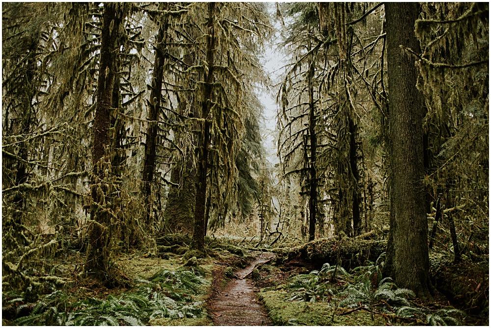 Hoh Rainforest Engagement Session Washington Olympic