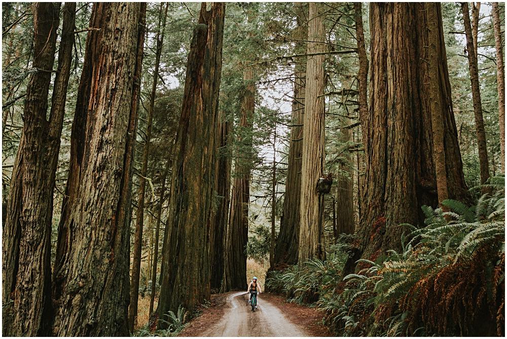 Redwoods National Park Biking