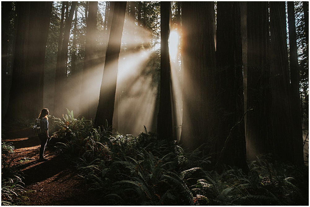 Redwoods National Park Engagement