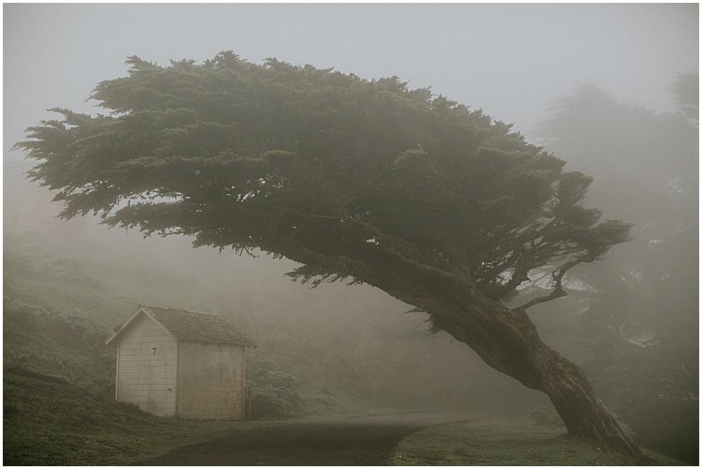 Point Reyes Tree in Fog