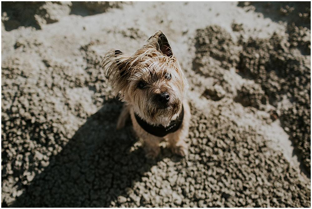Dog in Desert Photographer