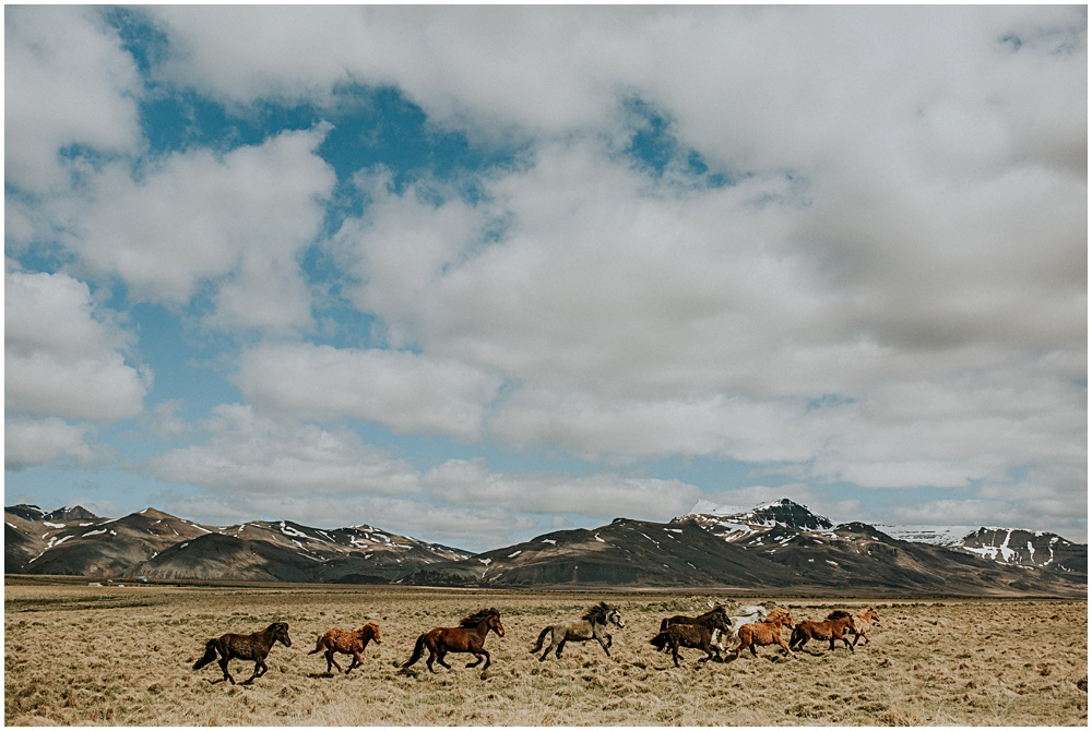 Wild Horses Iceland Hotel Budir