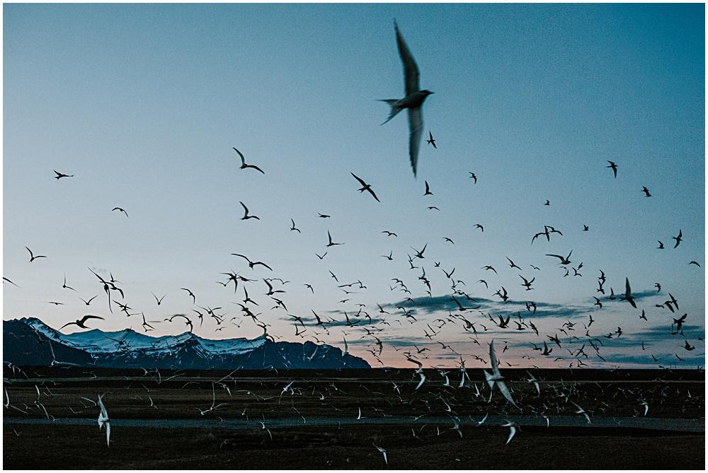 Jokulsarlon Birds Migrating Nesting