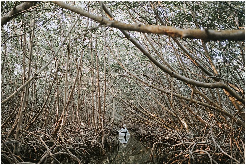 Boot Key Mangroves