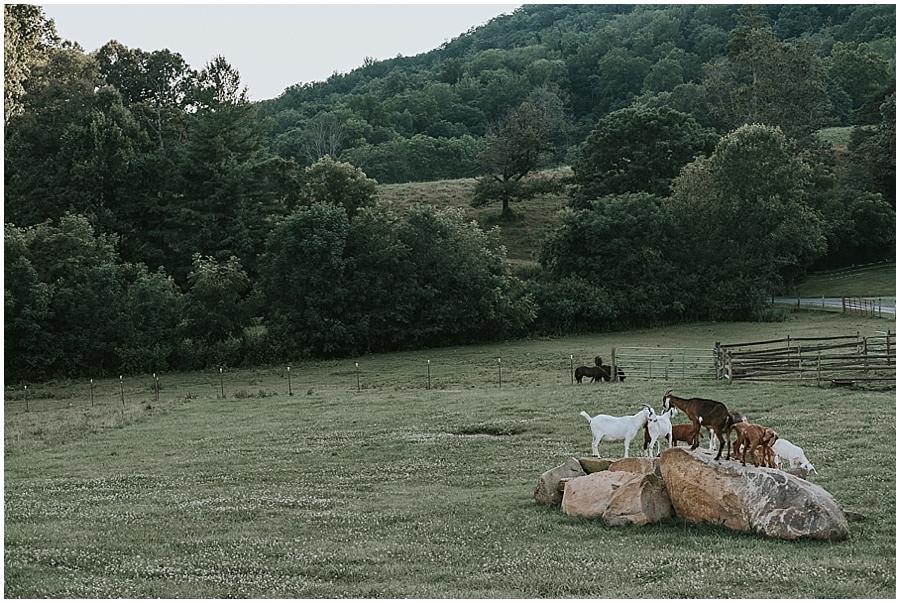 Claxton Farm Wedding_0107