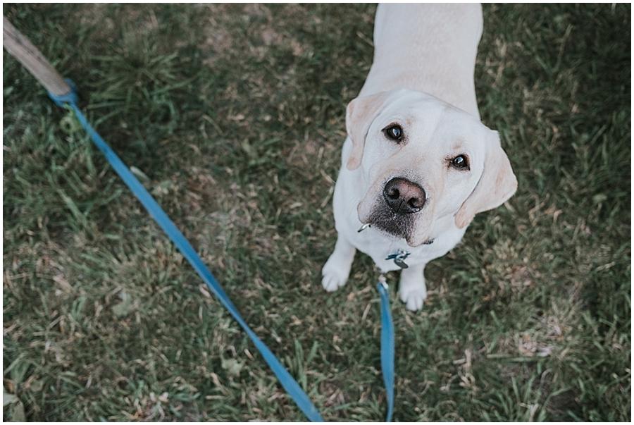 Dog friendly Winthrop Washington wedding