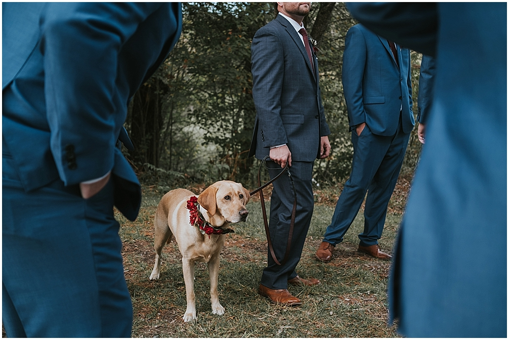 dog friendly venue in asheville north carolina